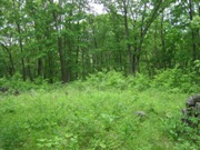 10 Acre Wooded Paradise!